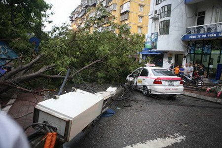 Retribution as humans destroy Hanoi roadside trees