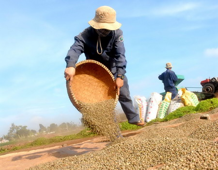 The short and long of Vietnam's coffee tribulations
