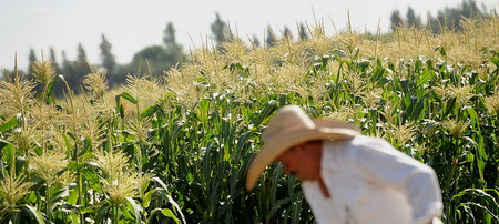 "US ""bullying' developing nations to accept genetically modified organisms"