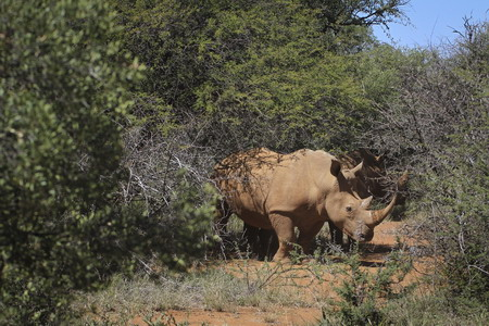 Small step forward in fight to save rhino