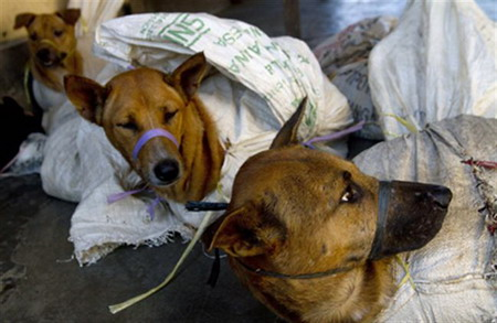 Excess feeds dog thefts and violence in Vietnam