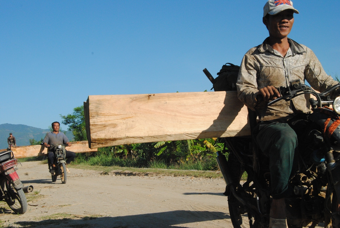 Wood poachers rule the road in southern Vietnam