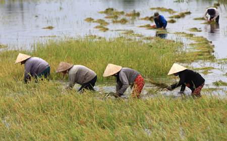 Vietnam farmers, SMEs threatened by upcoming free trade deals: trade expert