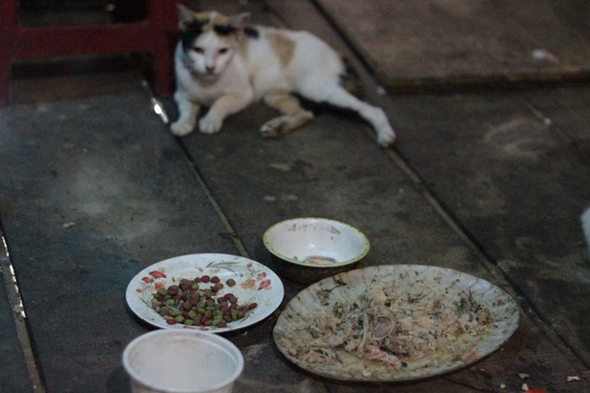What Can I Feed A Stray Cat Besides Cat Food