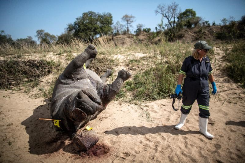 factors that encourages rhino poaching Unesco world heritage centre  to contribute to the on-going illegal trade in rhino horns and poaching of  on the state of conservation of the.