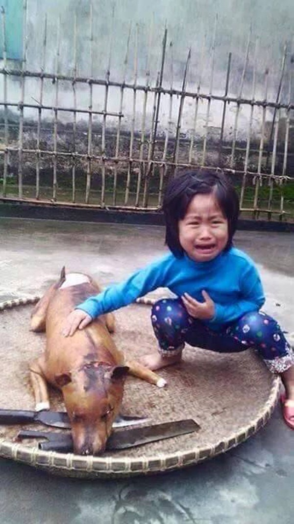 heart wrenching photo heats up dog meat debate on social