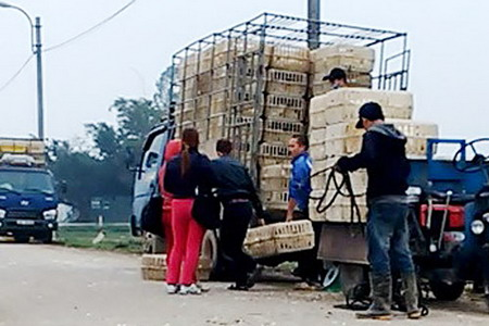 Corrupt officials allow untested poultry to be sold in Vietnam